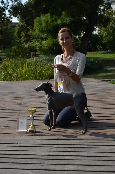 BOB & BIS Galileo Pustynny Wiatr - Italian Greyhound