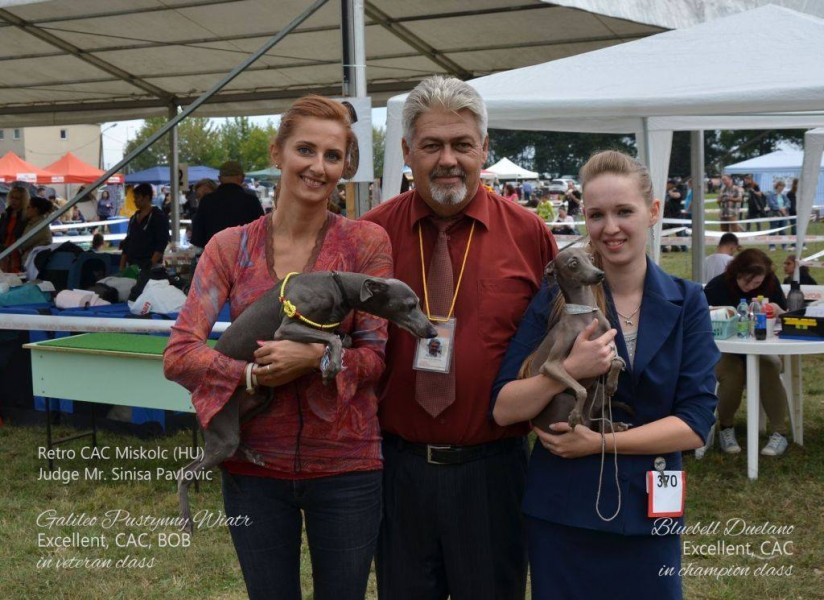 BOB Galileo Pustynny Wiatr - Italian Greyhound